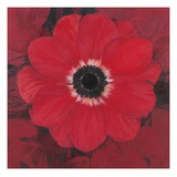Single Red Anemone