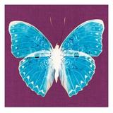 Purple Pop Butterfly