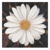 Magical White Daisy