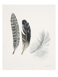 Field Study Feather Trio