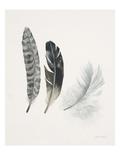 Field Study Feather Trio