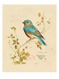Gilded Songbird 4