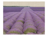 Lavender on Linen 2