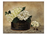 Park Avenue Hydrangea