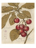 Cherry Etching