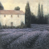 Lavender Field Detail