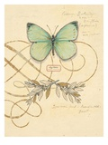 Scripted Papillon