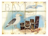 Bay Gull