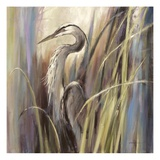 Coastal Heron