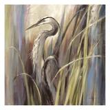 Coastal Heron