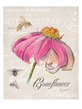 Sketchbook Coneflower