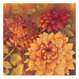 Autumn Dahlias 2