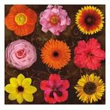 Floral Varieties 1