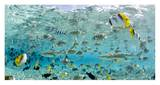 Blacktip Sharks and Tropical Fish in Bora-Bora Lagoon