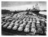 First Shipment of Beetles to America  1956
