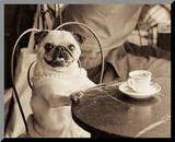 Cafe Pug Reproduction montée par Jim Dratfield
