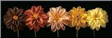 Floral Salute Reproduction montée par Assaf Frank