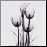 Tulips and Arum Lily Reproduction montée par Marianne Haas