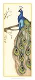 Rebecca's Peacock II