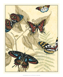 Graphic Butterflies in Nature II