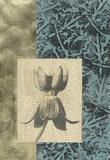 Embellished Nature's Vignette II