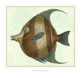 Angel Fish II