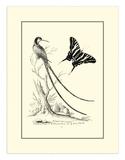 Long Tailed Hummingbird  c1742