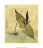 Tropical Fern II