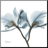 Orchids in Blue Reproduction montée par Albert Koetsier