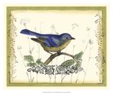 Bird & Wildflowers II