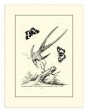 Longtailed Hummingbird   c1742