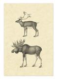 Vintage Elk