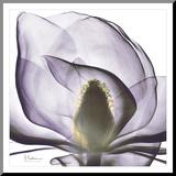 Precious Orchid in Purple Close Reproduction montée par Albert Koetsier