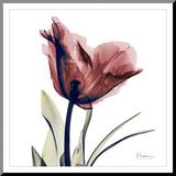 Single Tulip in Red Reproduction montée par Albert Koetsier