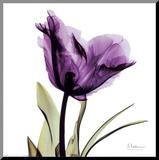 Royal Purple Parrot Tulip Reproduction montée par Albert Koetsier