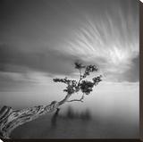 Water Tree  c2006