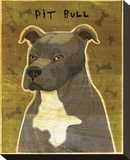 Gray Pit Bull