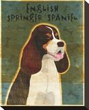 English Springer Spaniel (tri-color)