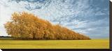 Autumn Colors  no 1