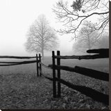 Fence in the Mist