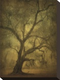 Avery Island Oaks  Study 12