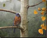 Bluebird Rain