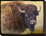 Bison Facing Right