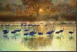 Cranes in Mist II