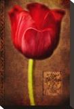Vintage Red Tulip II
