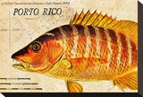 Vintage Color Fish  Porto Rico: US Fish Commission Fish Hawk 1900