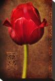 Vintage Red Tulip I