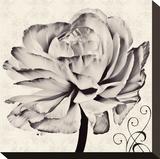 Ranunculus V