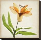 Bright Lily II