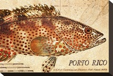 Vintage Color Fish: Porto Rico  US Fish Commission Fish Hawk  1899